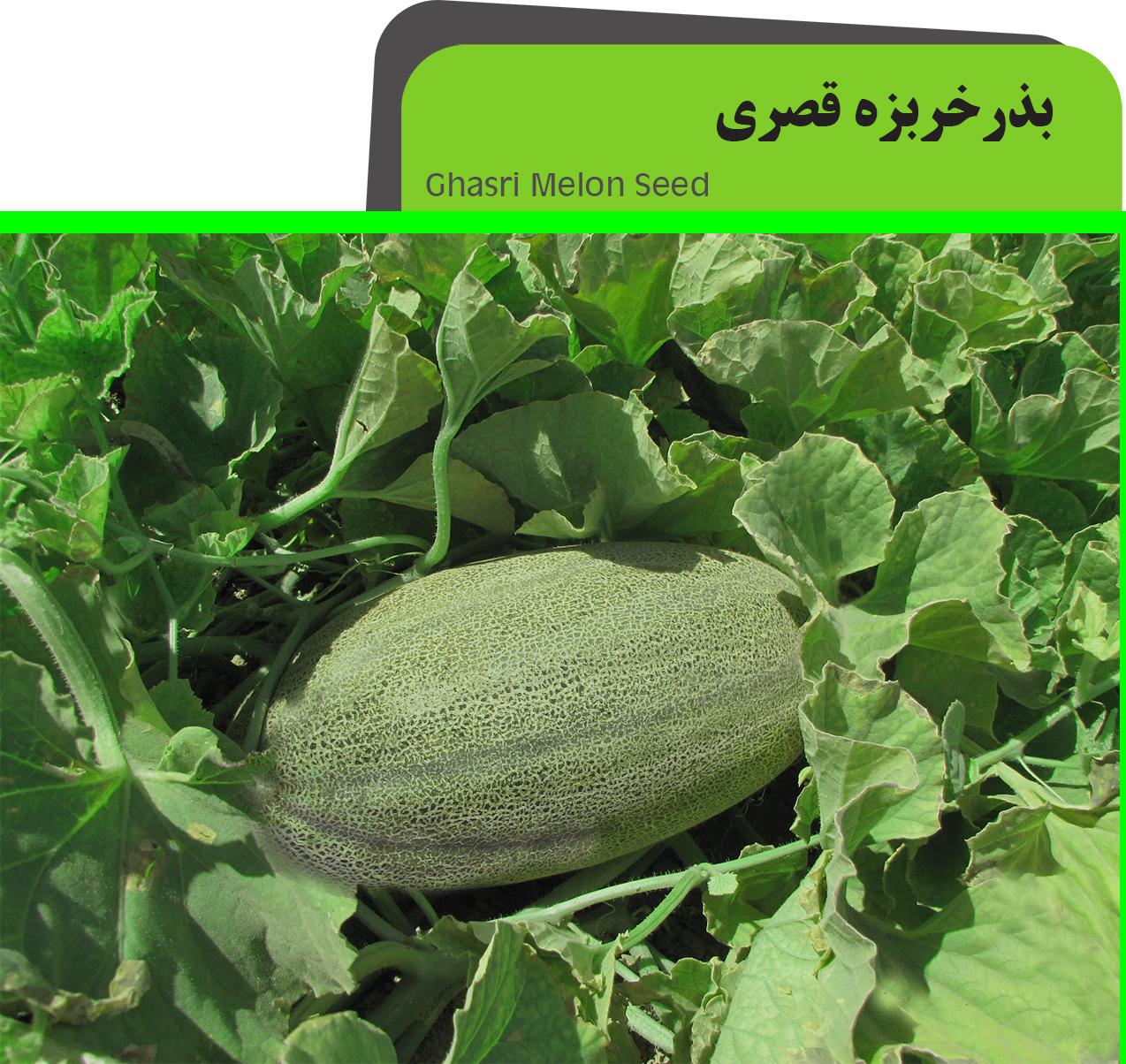 Ghasri Melon Seed